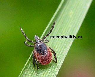 http://encephalitis.ru/uploads/posts/1178176096_samka.jpg