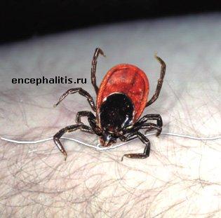 http://encephalitis.ru/uploads/posts/1176107061_tick_off1.jpg